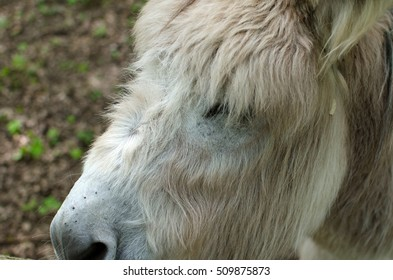 Closeup of donkey in the zoo