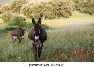 close-up of donkeys wallking in field