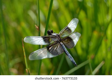 Closeup of a dragon fly in a garden