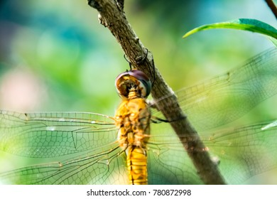 A close-up of a dragonfly on a branch