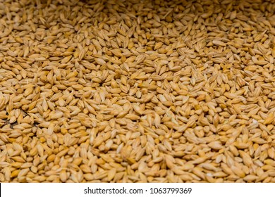 Close-up Dried Barley Malt in a sack for brewing beer