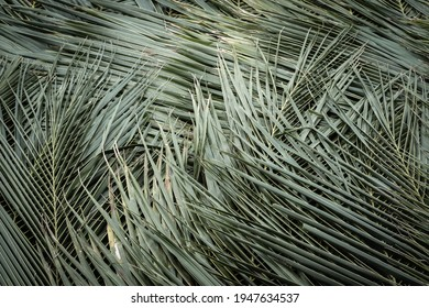Closeup dried coconut leaves roof of hut, dried palm leaves texture for background