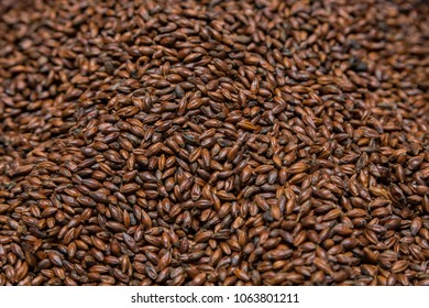 Close-up Dried Dark Black Barley Malt in a sack for brewing beer