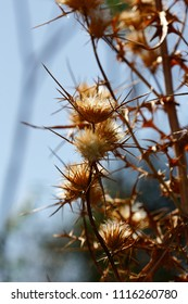 Close-up of dried plants on the summer field, blue sky background. Macro photography of nature.