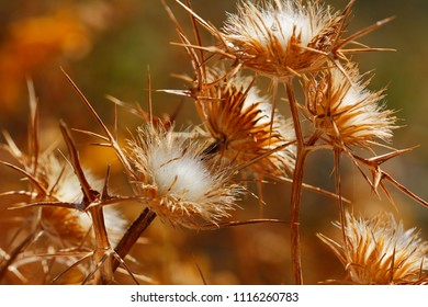 Close-up of dried plants on the summer field. Macro photography of nature.