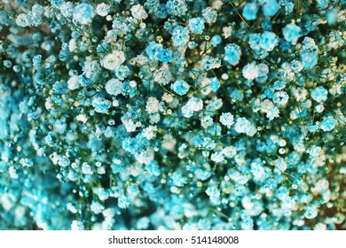 Closeup of dry blue baby's breath flowers (Gypsophila paniculata) over blue background; shot in shallow depth of field
