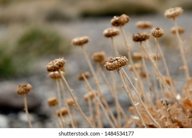 Close-up of a dry flower without petals during the autumn. The other flowers are out of focus.