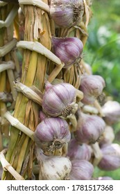 A close-up of a dry garlic wreath.