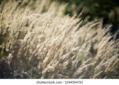 A closeup of dry grass in autumn forest. Background