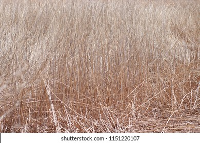 Close-up dry grass field asbtract background.
