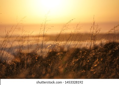 A closeup of a dry yellow grass field with a blurred skyline in the background on Mt. Tam in Marin, CA
