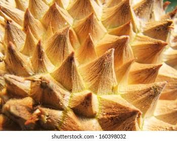Closeup of durian fruit skin