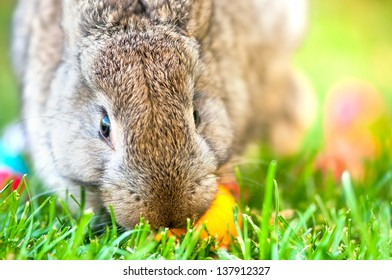 Close-up of easter bunny with colorful eggs and green background