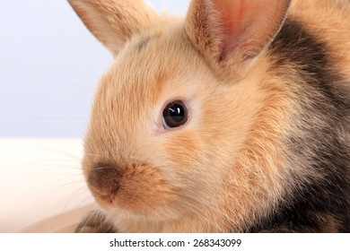 close-up of easter bunny on white background studio
