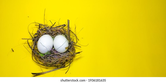 Closeup of an Eggs in a  Nest isolated on a yellow background with copy space and a Selective focus on Eggs