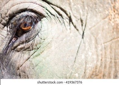 Close-up from an elephant.