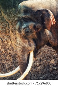 Close-up of Elephant Head