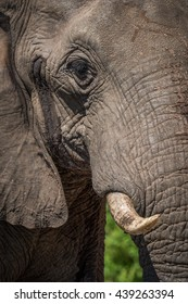 Close-up of elephant head in bright sunshine