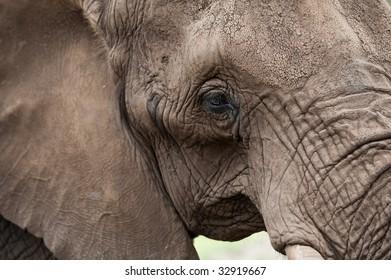 A close-up of an elephant's head