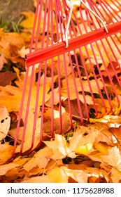 Close-up of enameled red metal rake, tree trunk and yellow maple leaves in autumn. Fall lawn and garden tools property maintenance yard chores. Vertical background image with empty blank copy space.