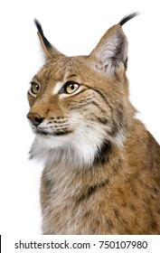 Close-up of Eurasian Lynx, Lynx lynx, 5 years old, in front of white background