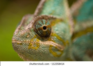 Closeup of the eye of a chameleon with green background