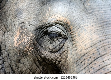 Closeup of the eye and the grey skin of  an elephant