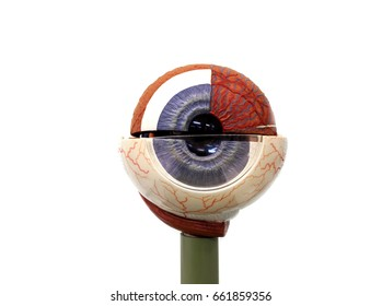 closeup eye models on white background. soft-focus and over light