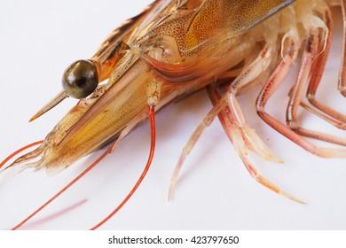 closeup eye shrimp on white background.