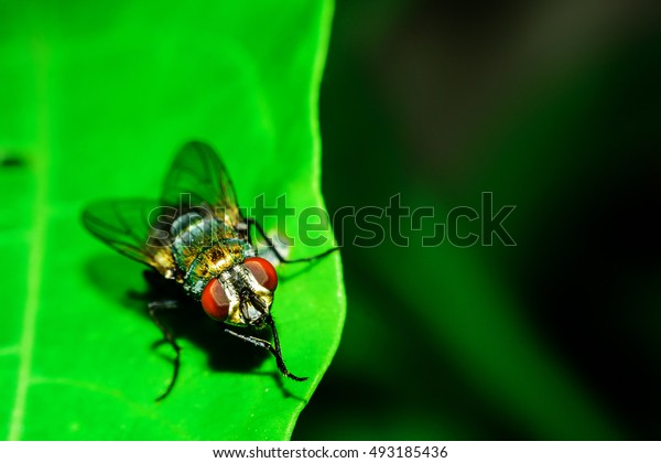 close-up of eyes of a fly on a green leaf