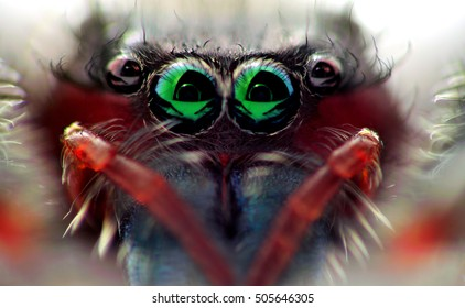 Close-up of the eyes of a jumping spider.  Photographed in Virginia, USA.