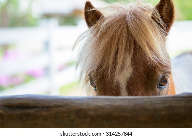 Closeup face of horse in stable