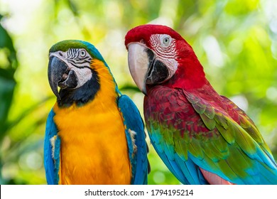 Closeup face of Macaw colorful birds