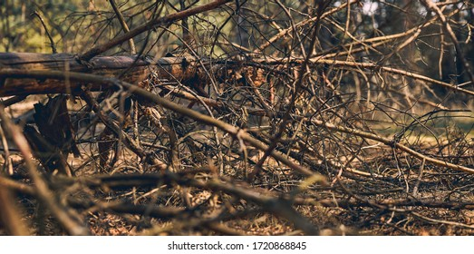 Closeup of a fallen tree with leafless branches lying on the ground in the woods - Shutterstock ID 1720868845