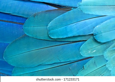 Closeup feather Blue and Gold Macaw , thailand