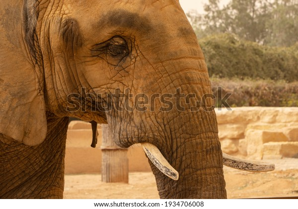 closeup-female-elephant-animal-zoo-600w-