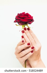 Closeup of female hands with beautiful professional glossy red manicure holding not very fresh rose.
