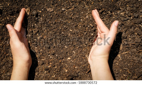 Closeup of female hands holding fertilized soil from garden bed. Concept of growth, organing farming and people working on ground.