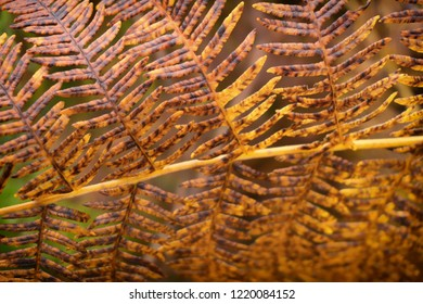 Closeup of fern during autumn in the Hermitage, Dunkeld, Scotland.
