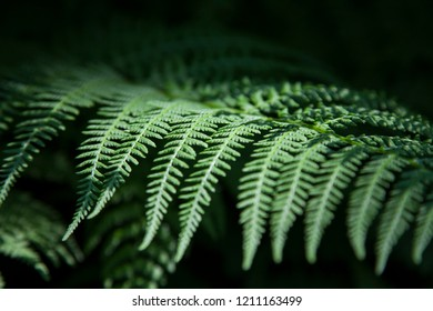 Closeup fern leaf on the black background