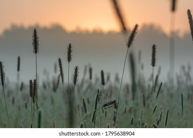 Close-up with field of flowers during early morning sunrise with fog