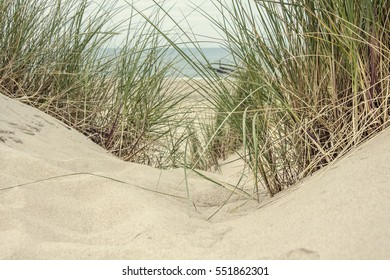 Close-up of fine yellow sand and green grass in the dunes of a Dutch beach on a sunny and windy day