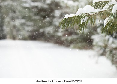 Close-up of fir tree branch against falling snow. Winter background. Christmas concept