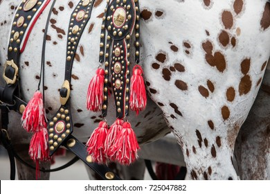 Closeup of flamboyant saddlery of spotted horse