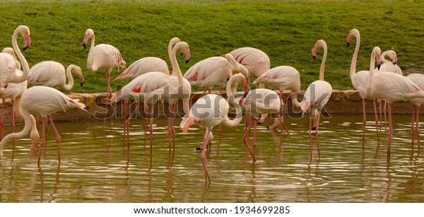 closeup-flamingos-birds-on-nature-600w-1