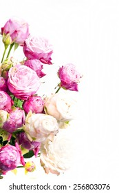 Close-up floral composition with a pink and white Peony- roses