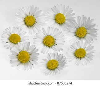 closeup of a floral daisy flower arrangement in light back