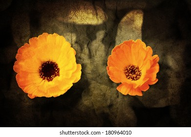 A close-up of a flower of Adonis on a grunged canvas background
