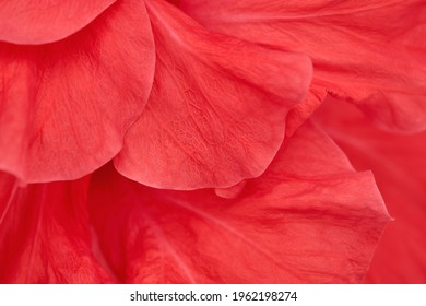 Close-up flower petals, abstract natural background with vivid red color. - Shutterstock ID 1962198274