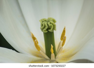 close-up of a flower with visible pollen on the post